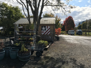 BB at the Local Nursery in Snoqualmie